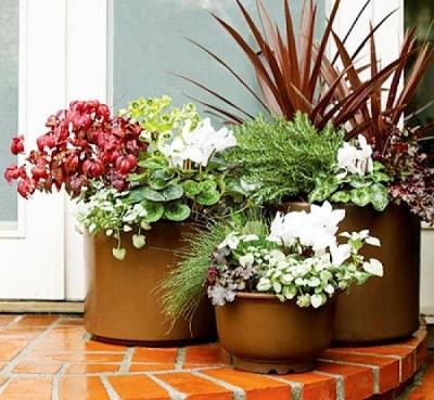 Композиция-из-комнатных-растений-у-двери-400x369
